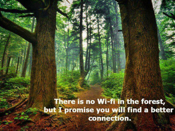 there is no wifi in the forest